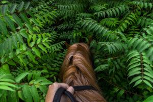 Astrofotografa Alessia Scarso fotografa cavallo felci vulcano Etna