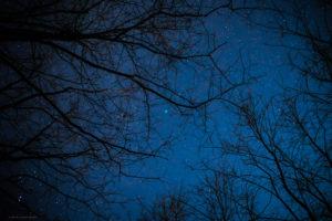 Astrofotografa Alessia Scarso astrofotografia paesaggio notturno alberi cielo stellato Cometa 46P/Wirtanen Nettuno