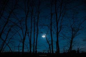 Astrofotografa Alessia Scarso astrofotografia paesaggio notturno alberi cielo stellato luna Nettuno