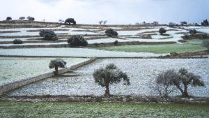 Alessia Scarso fotografa paesaggio iblei neve ulivi campi
