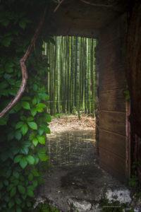 Alessia Scarso fotografa porta su foresta di bambu giardino di ninfa