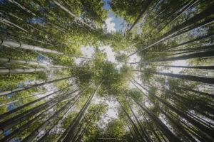 Alessia Scarso fotografa foresta di bambu giardini di ninfa