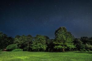 Alessia Scarso astrofotografa astrofotografia cielo stellato su bosco di Aviano