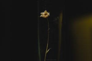 Alessia Scarso fotografa fiore in vaso di notte
